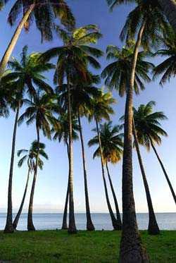 Кокосовая роща Капуаива