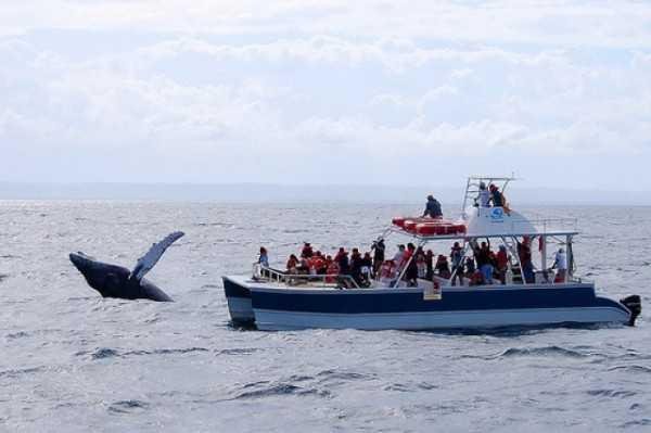 Отдых в Доминикане - брачные игры горбатых китов