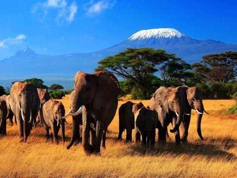 Отдых вКении