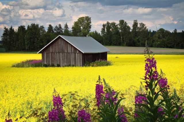 Возможности летнего отдыха в Финляндии