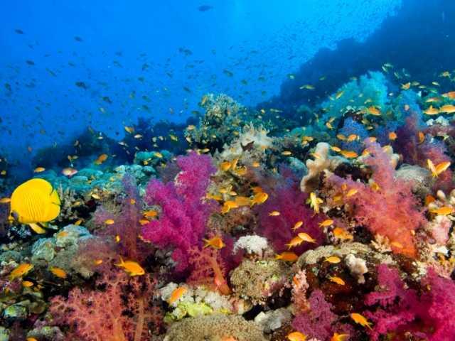 Слоновий риф