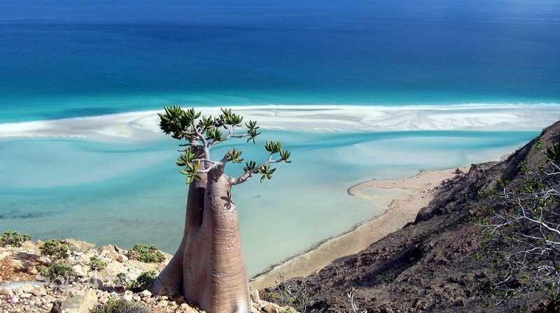 Сокотра остров в Йемене