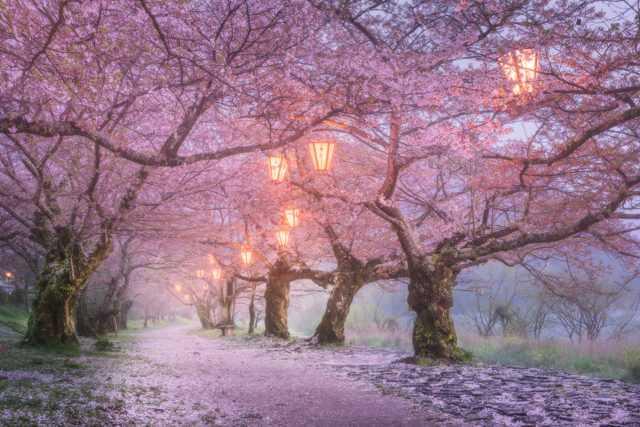 япония весной