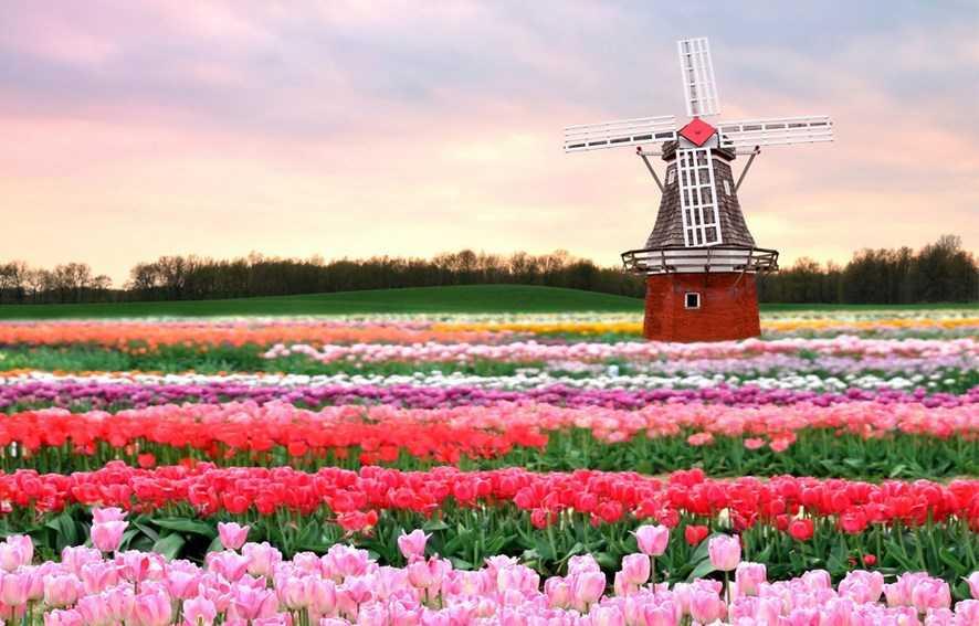 голландия весной