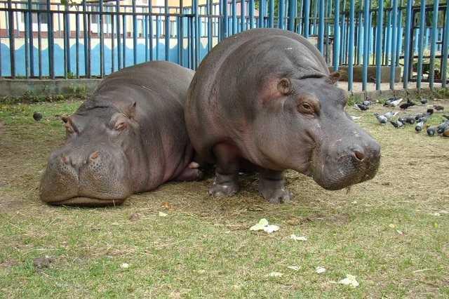 зоопарк в Калининграде