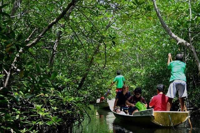 мангровый лес лембонган