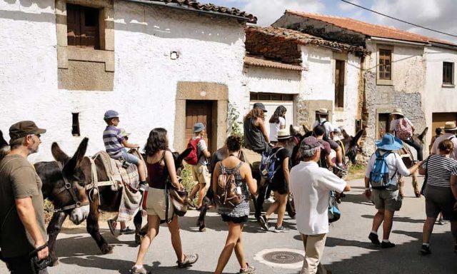 праздник ослов в португалии